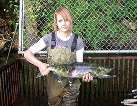 Hood Canal Salmon Need You