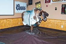 The 70-era riding bull has become a polular attraction at McCloud's