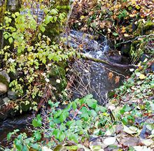 Salmon stream next to property